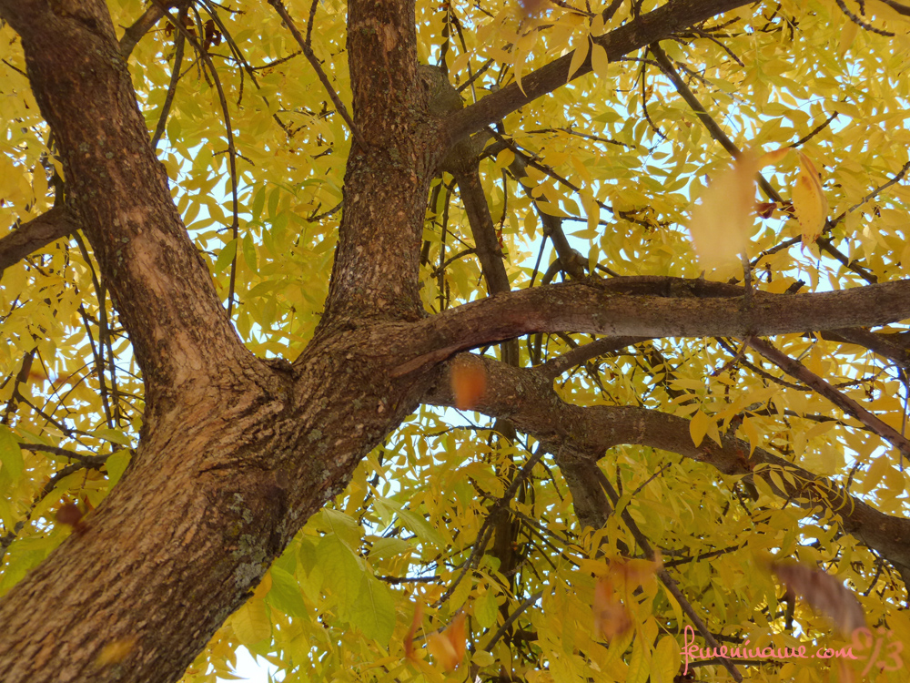 Arbol en otoño